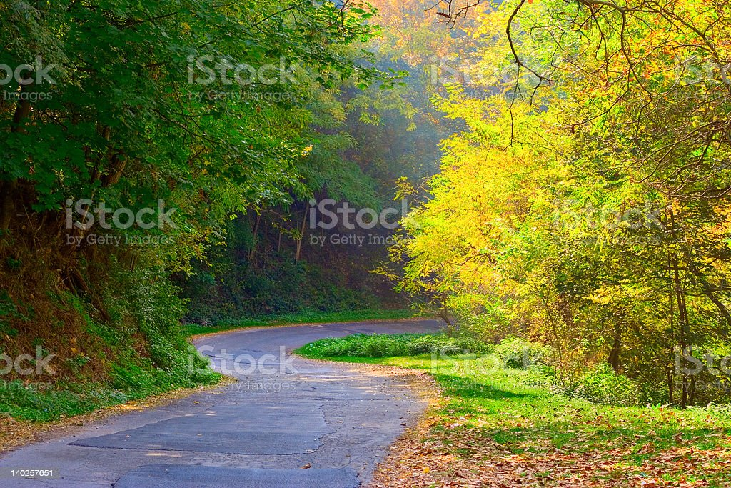 Curved road in the forest royalty-free stock photo