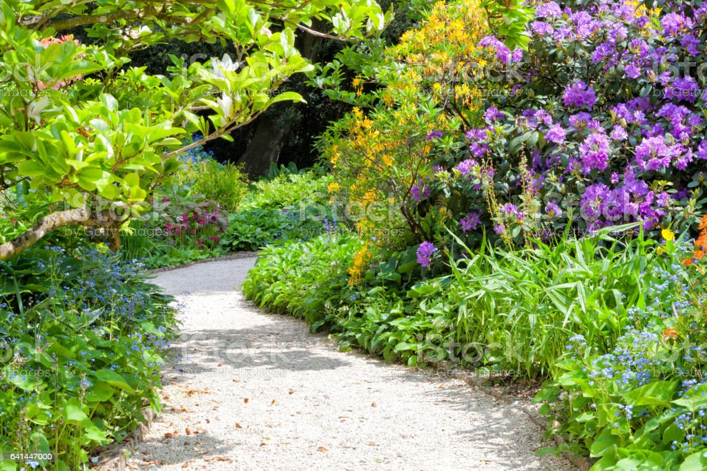 Curved stone path in a colorful garden with flowering yellow azalea, purple rhododendron, blue forget me not stock photo
