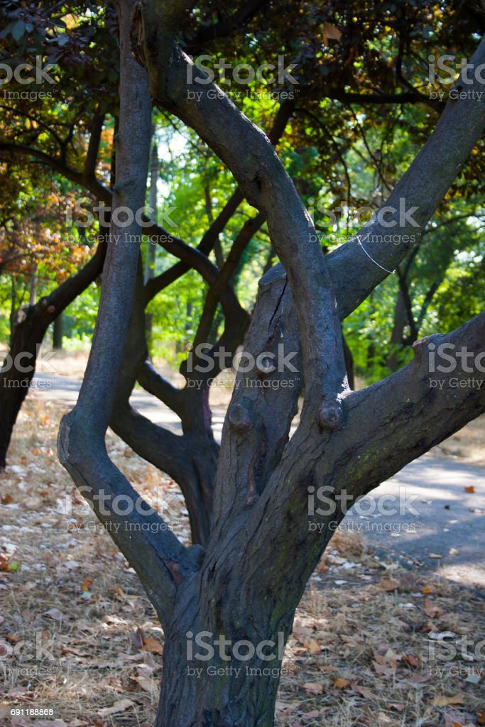 Curved tree branches stock photo