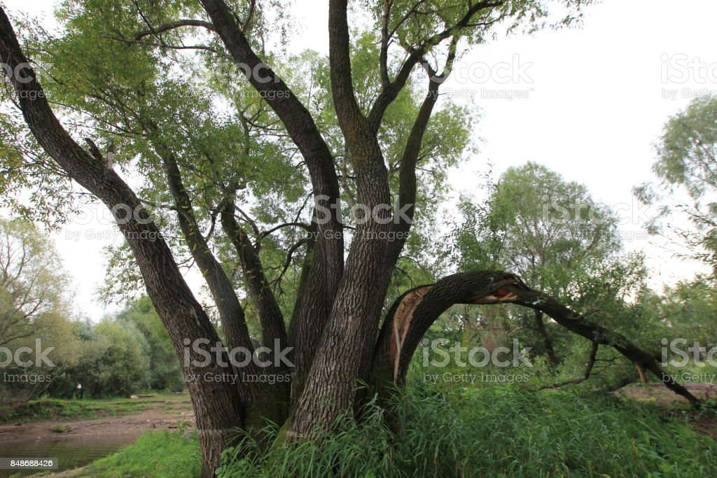 curved trees stock photo