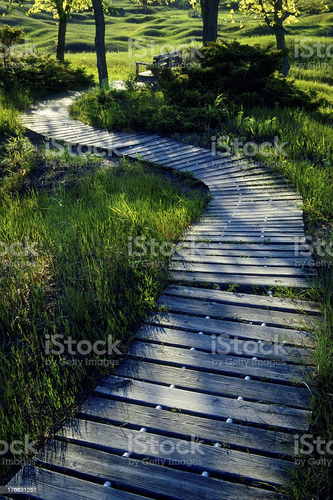 Curved Wooden walkway path through lush green park with bench stock photo