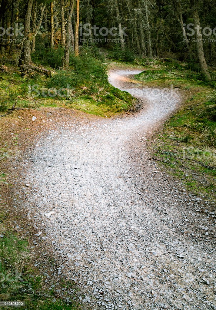 Curving mountainbike trail through the forest stock photo