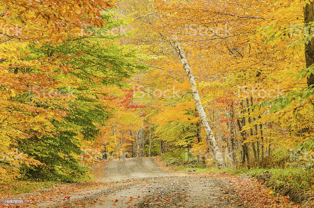 Curving Road and Autumn Colours stock photo