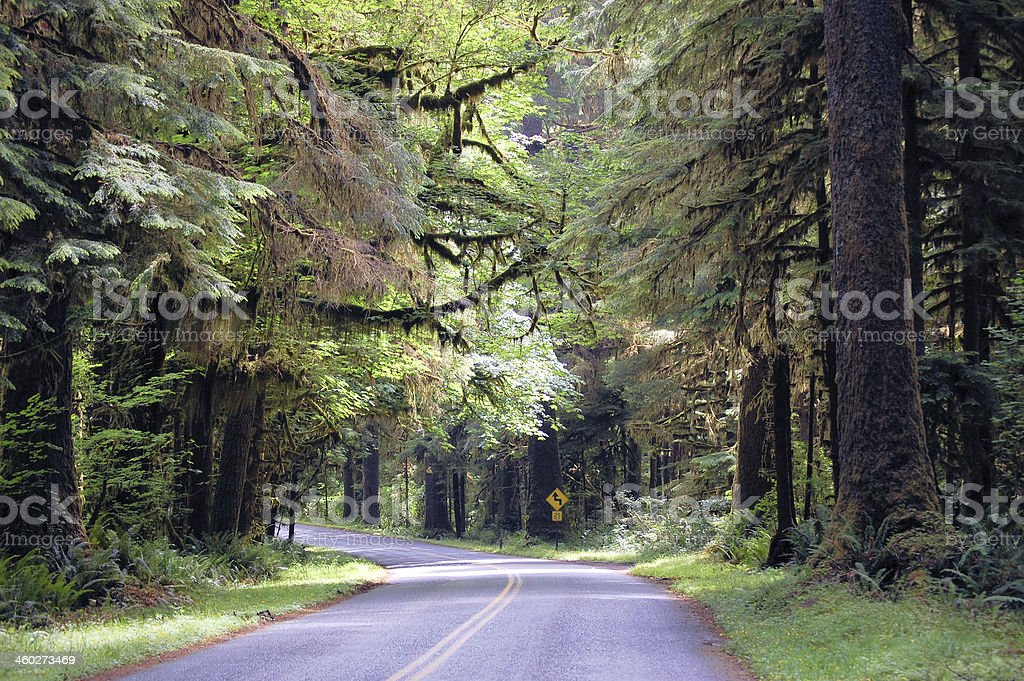Curving Road Throught a Rain Forest stock photo