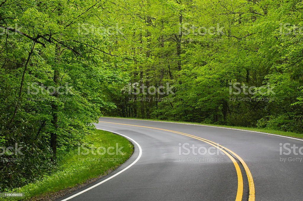 A curving road with a lot trees stock photo