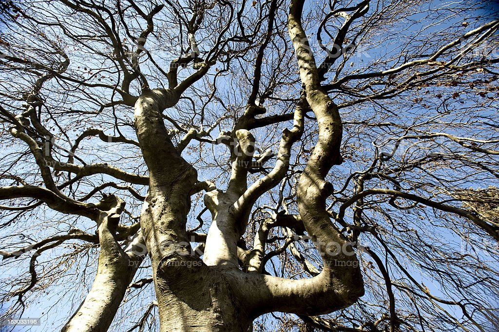 Curvy Branches stock photo
