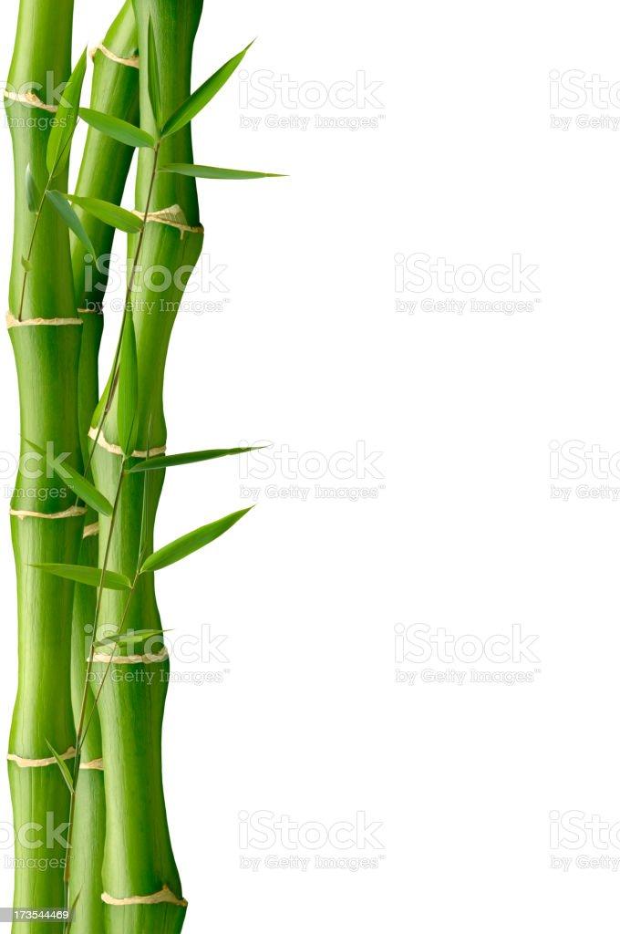 Curvy Green Bamboo stock photo