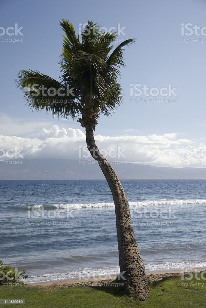 Curvy Palm stock photo