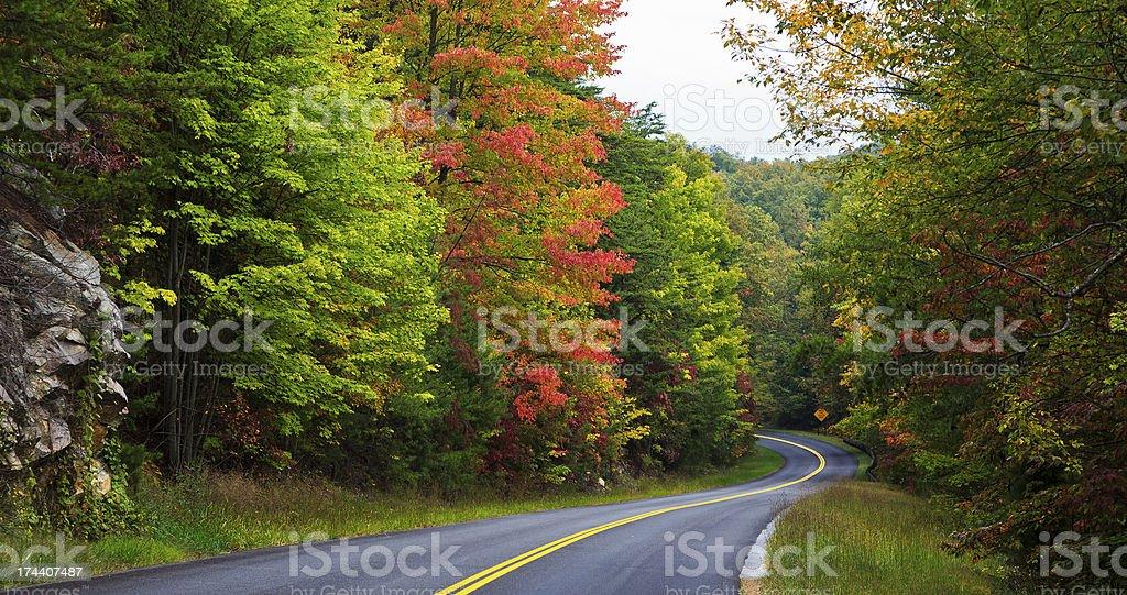 Curvy Road in Autumn stock photo
