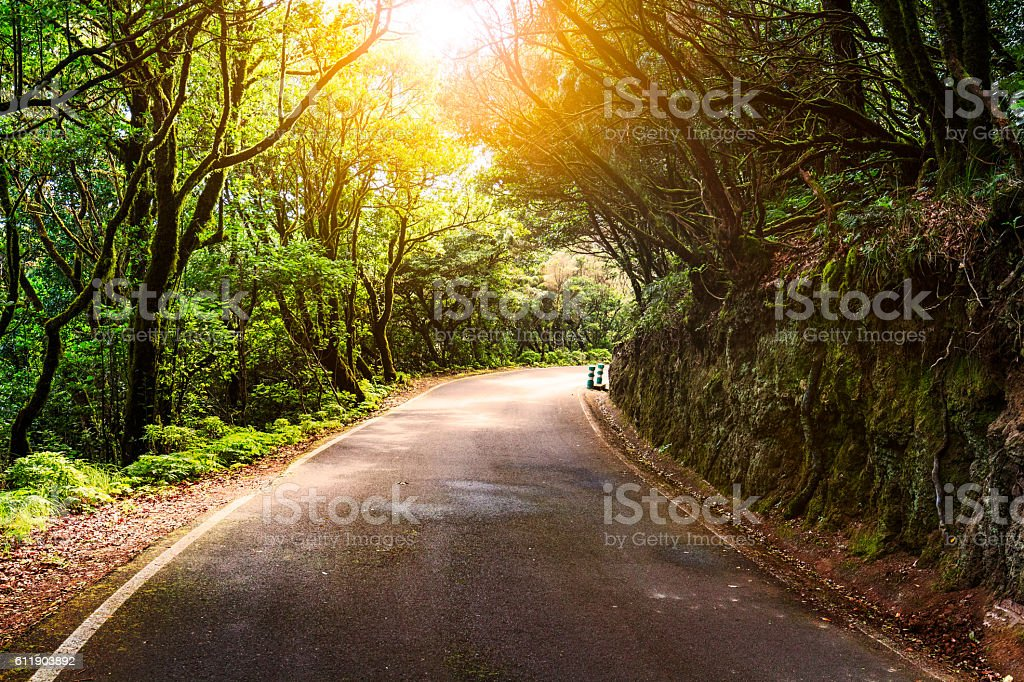 Curvy road in the forest in autumn, fall colors stock photo