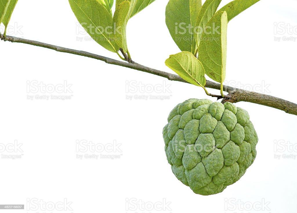 Custard apple isolated stock photo