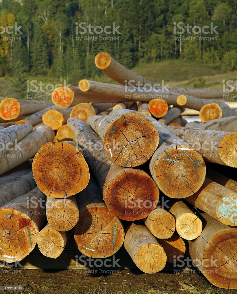 Cut and Graded Logs At Sunset royalty-free stock photo