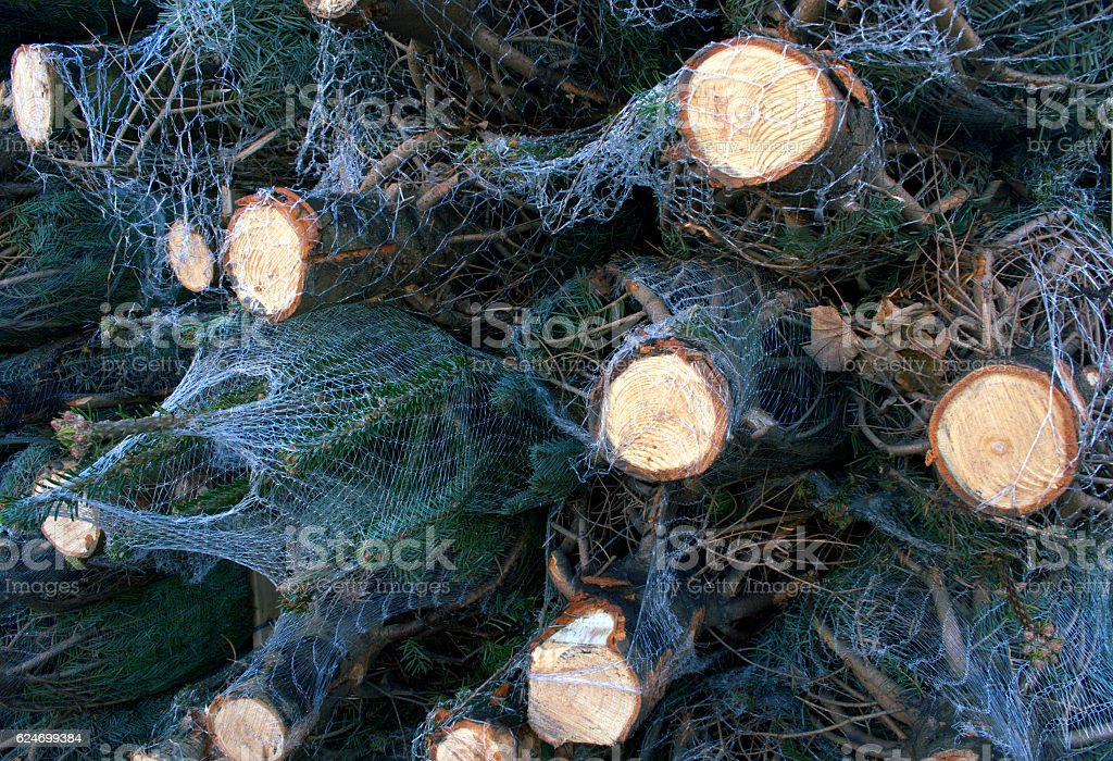 Cut and netted christmas trees stock photo