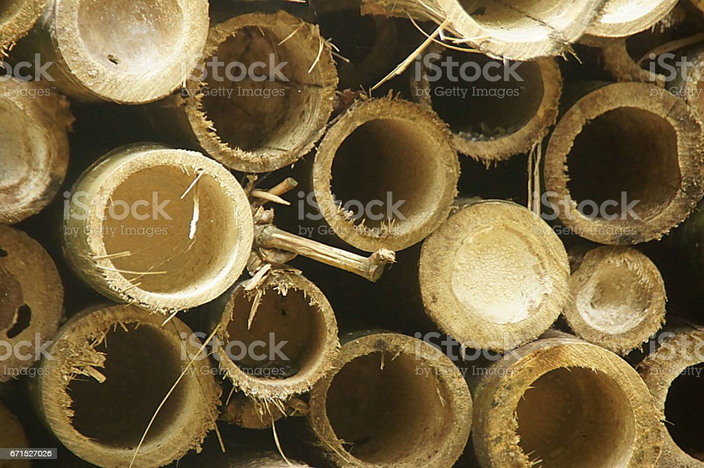 Cut bamboo stack (close up) stock photo