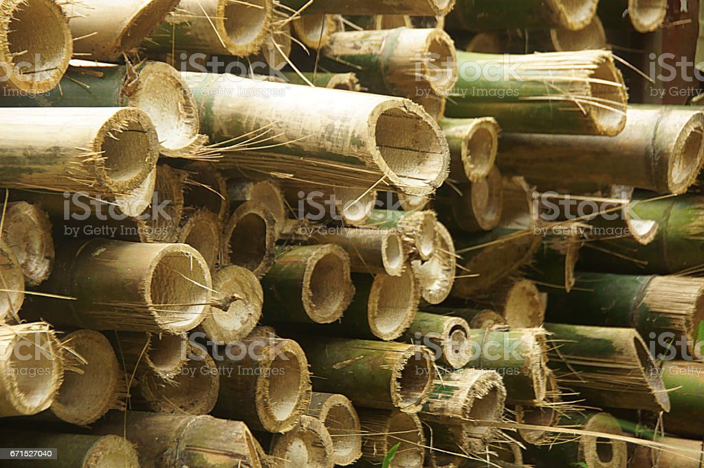 Cut bamboo stack stock photo