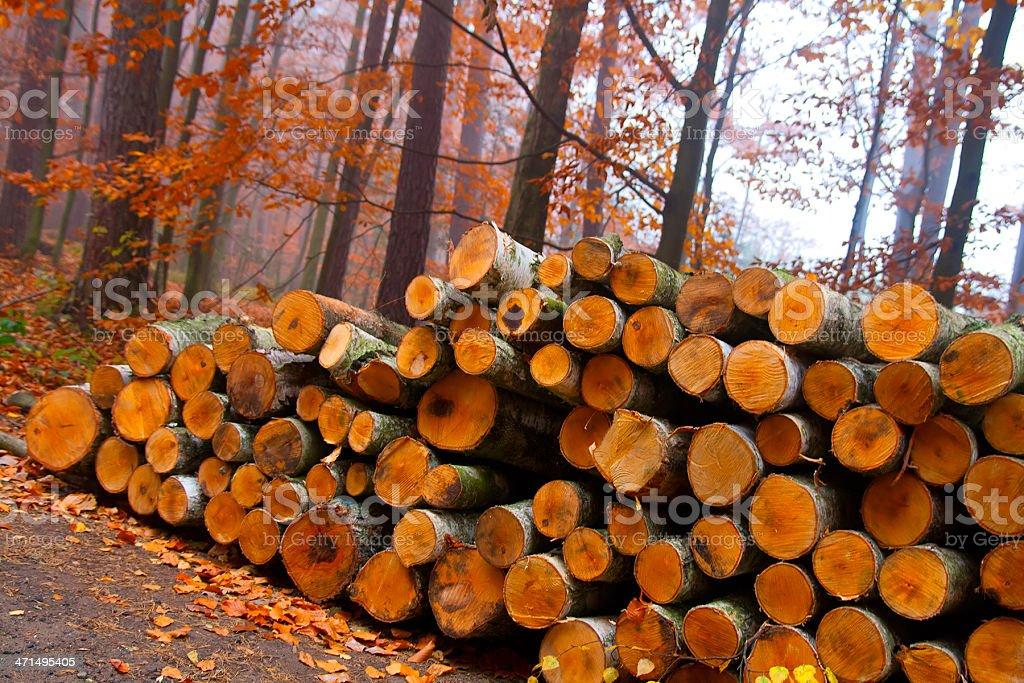Cut birch wood logs royalty-free stock photo