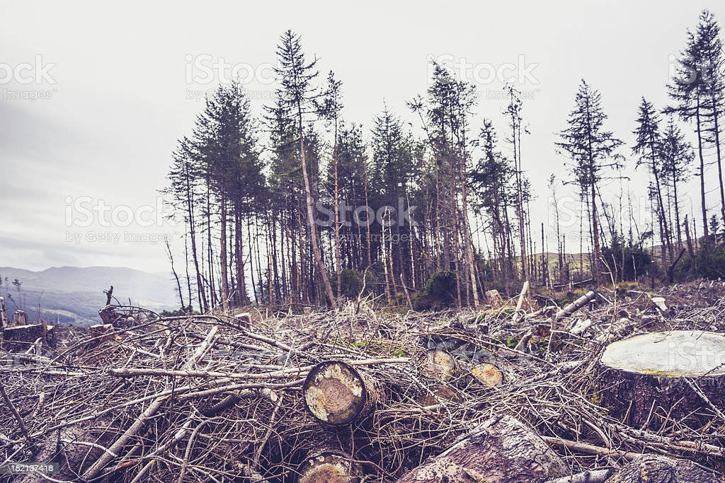 Cut down forest royalty-free stock photo
