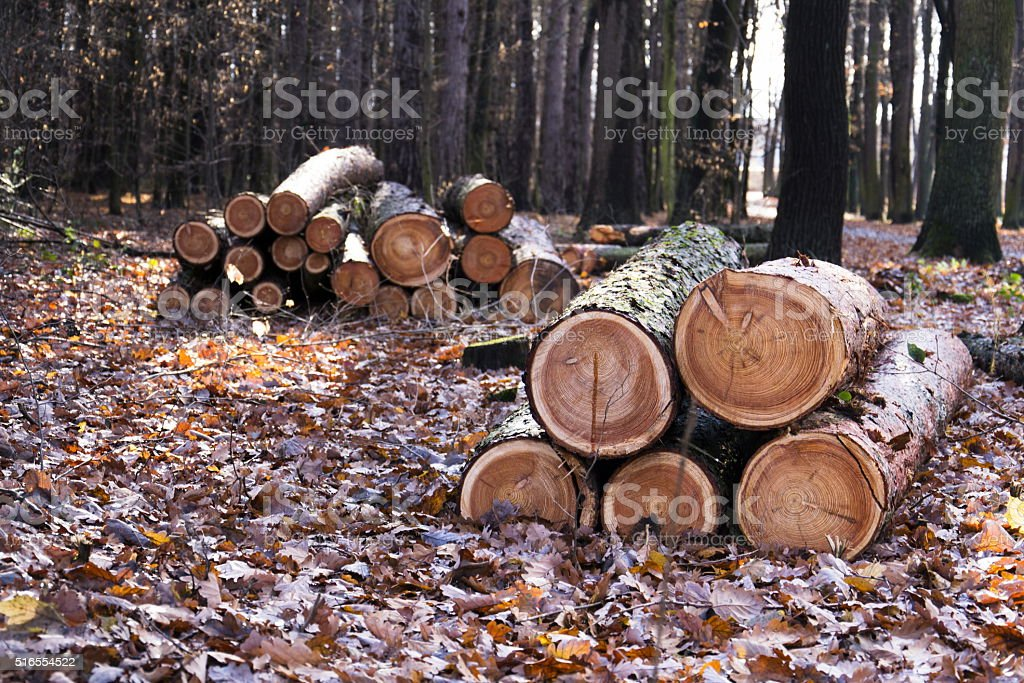 Cut down wood logs stack lies in autumn forest stock photo