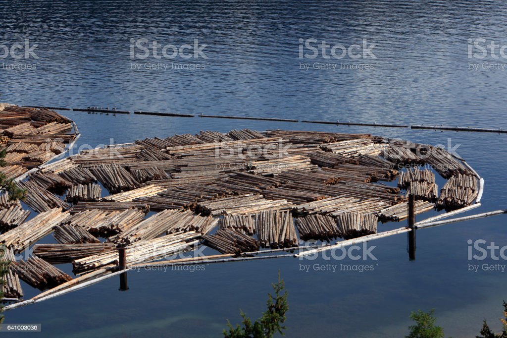 Cut Forestry Logs Bound Together In Design stock photo