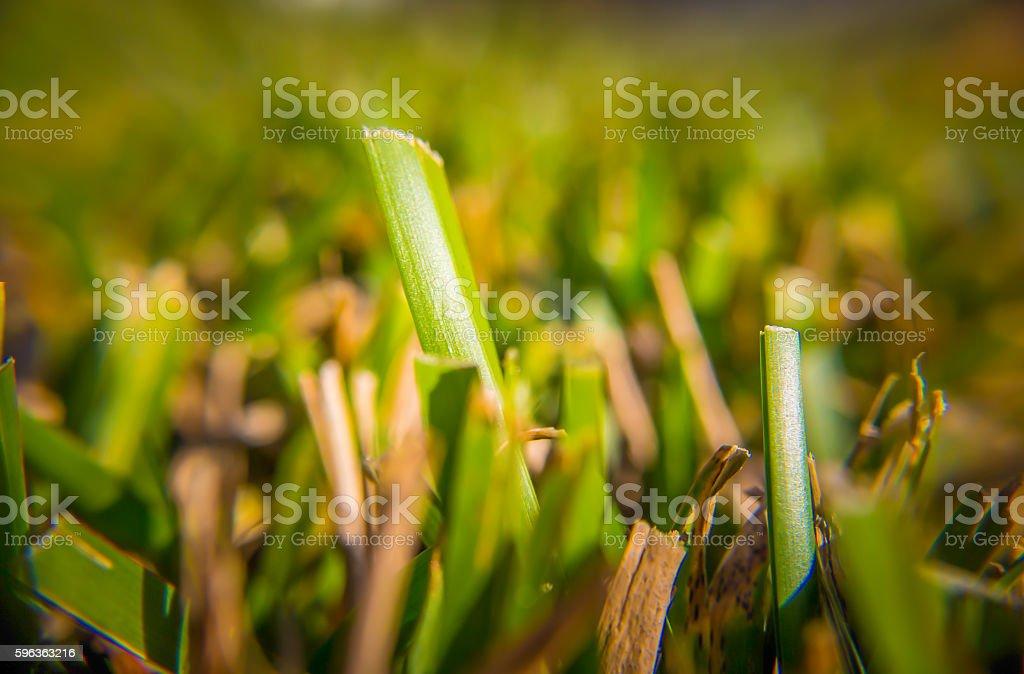 Cut herbe  photo libre de droits