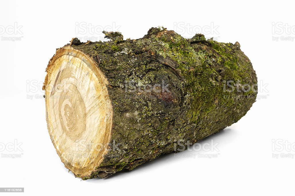Cut log of cherry wood royalty-free stock photo