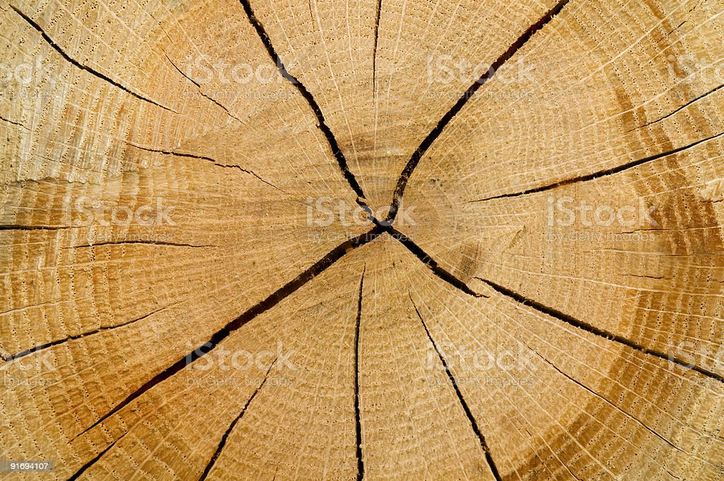 Cut log wood background texture royalty-free stock photo