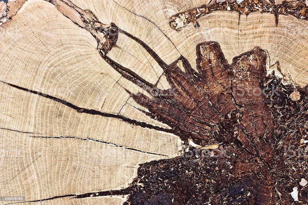 Cut of dead tree royalty-free stock photo