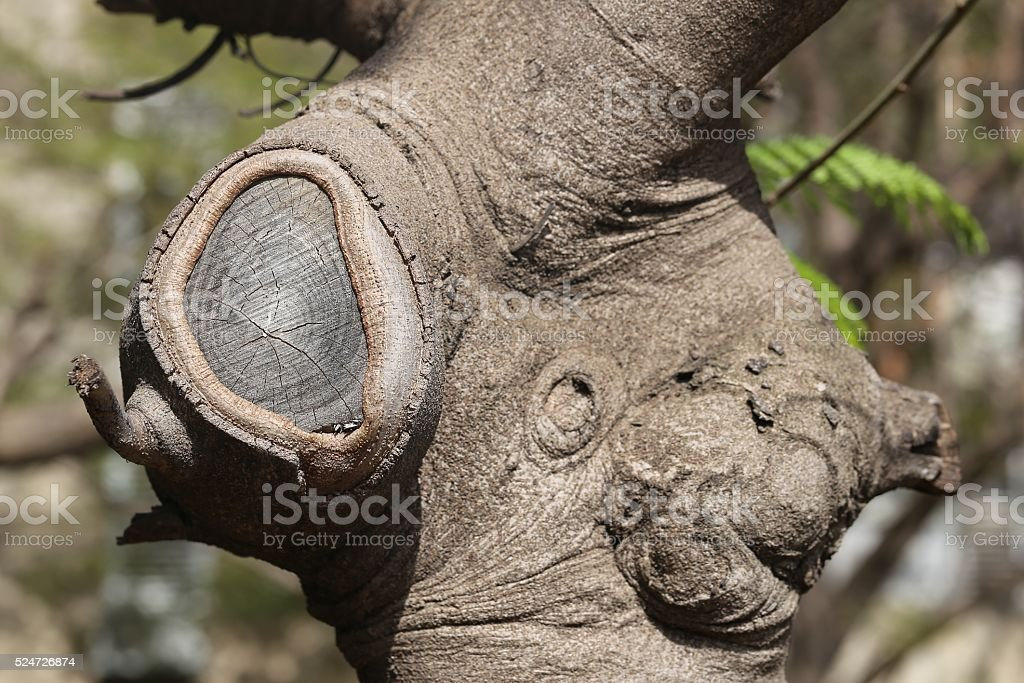 Cut Off Branch stock photo