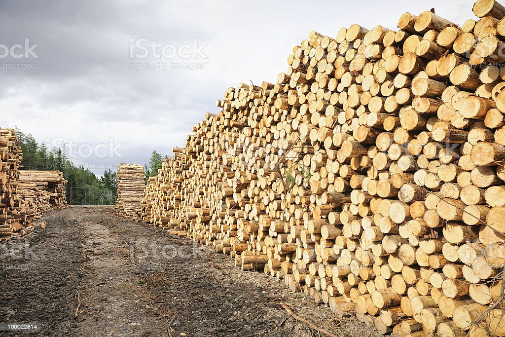 Cut Timber Stack royalty-free stock photo