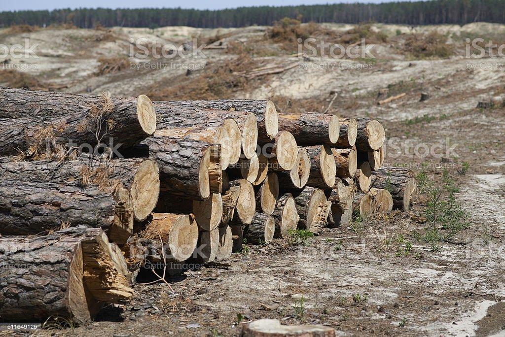 cut tree felling trees stock photo