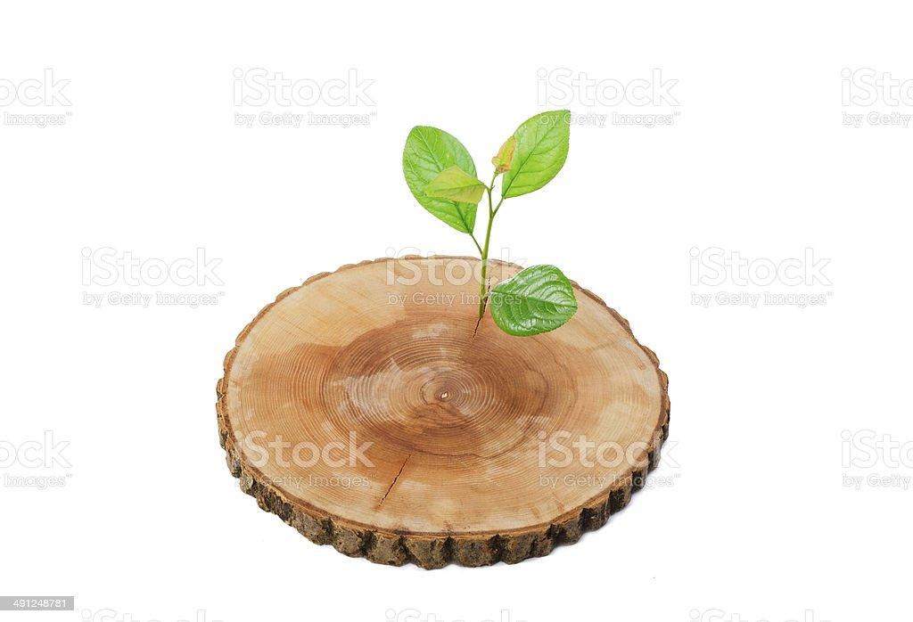 cut tree green sprout on a white background stock photo