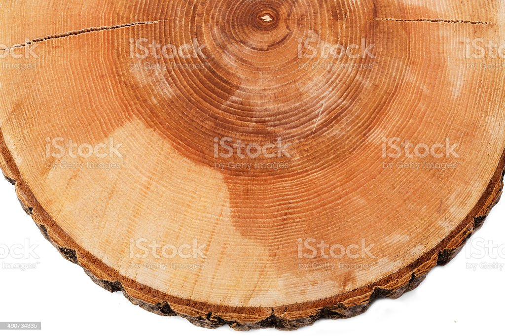 cut tree growth rings stock photo