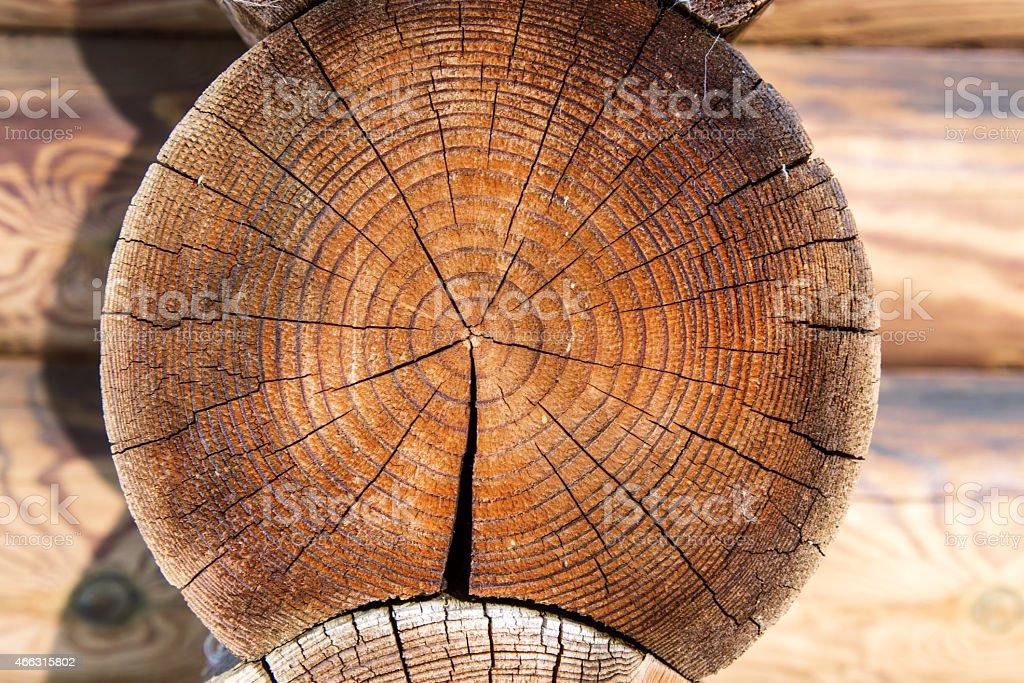 cut tree. stock photo