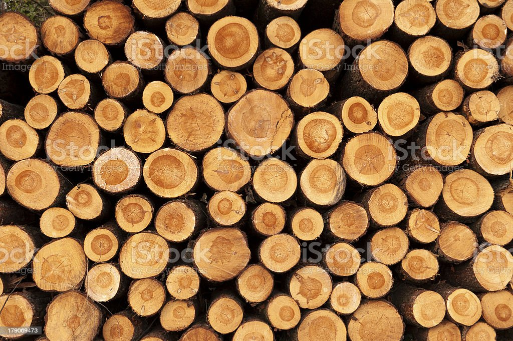 Cut tree trunks piled up stock photo