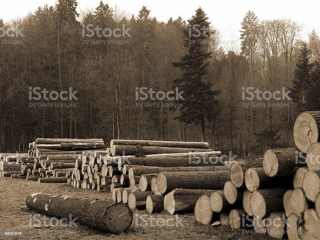 Cut Trees royalty-free stock photo