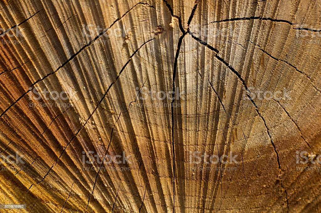 cut wood in the form of sunlight stock photo
