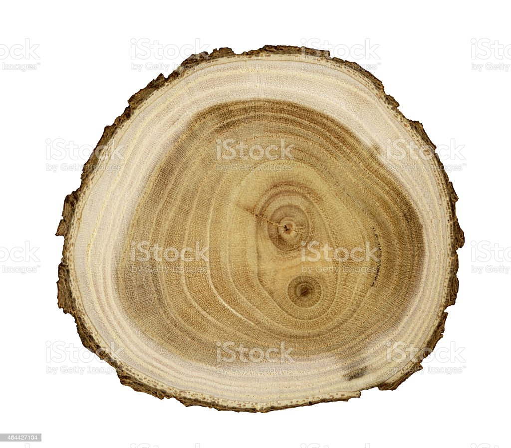 Cut wood stock photo