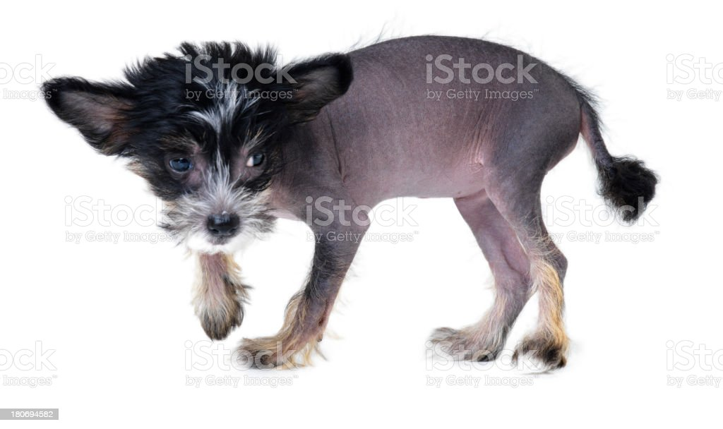Cute and a little uncertain stock photo