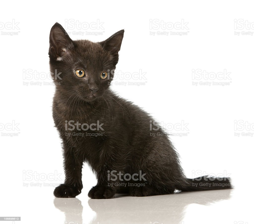 Cute and curious kitten checks out her surroundings royalty-free stock photo