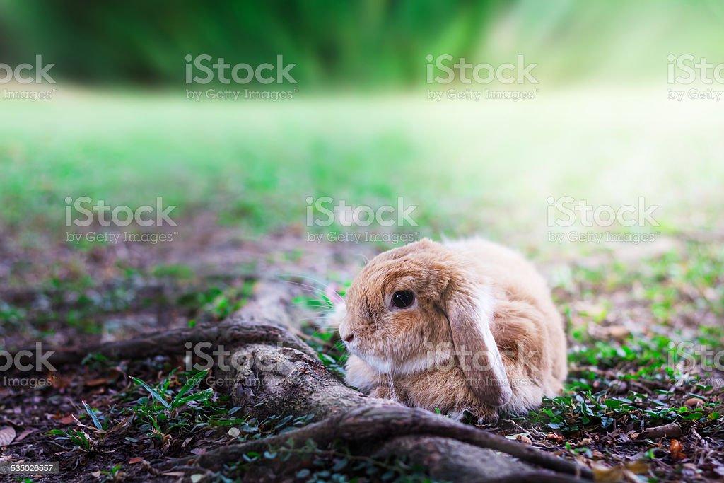 Cute Baby Bunny rabbit stock photo