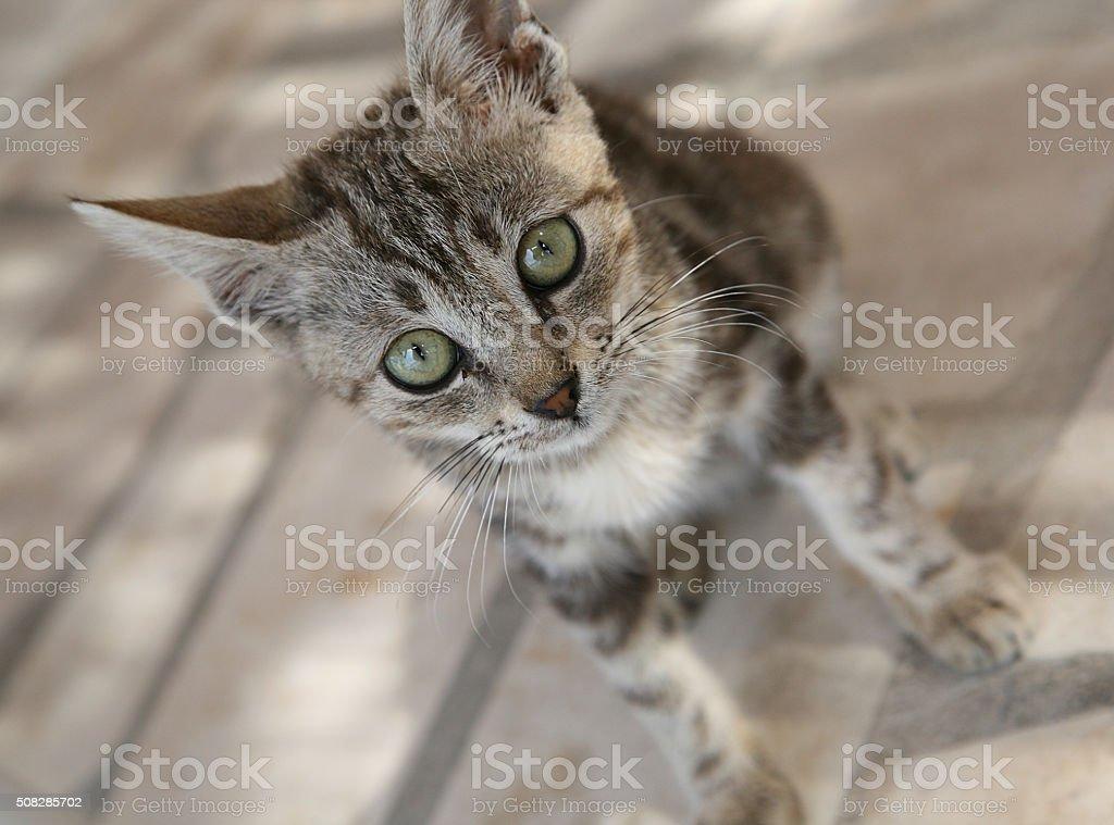 Cute baby cat stock photo