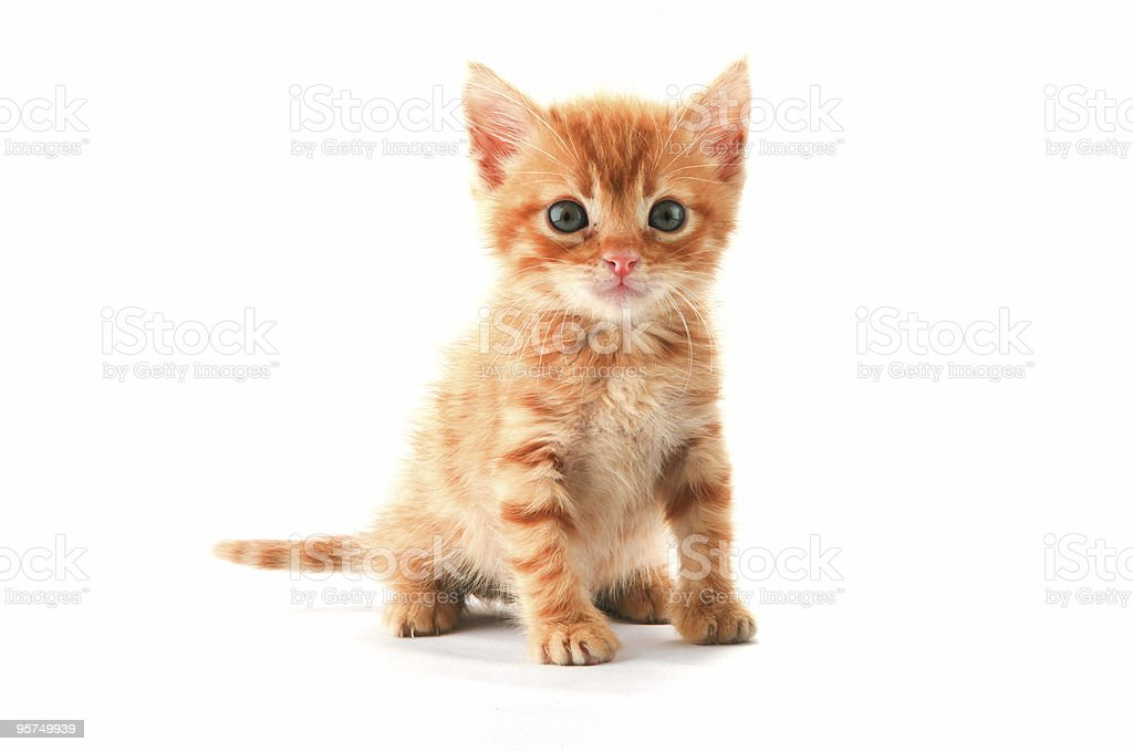 Cute Baby Cat stock photo