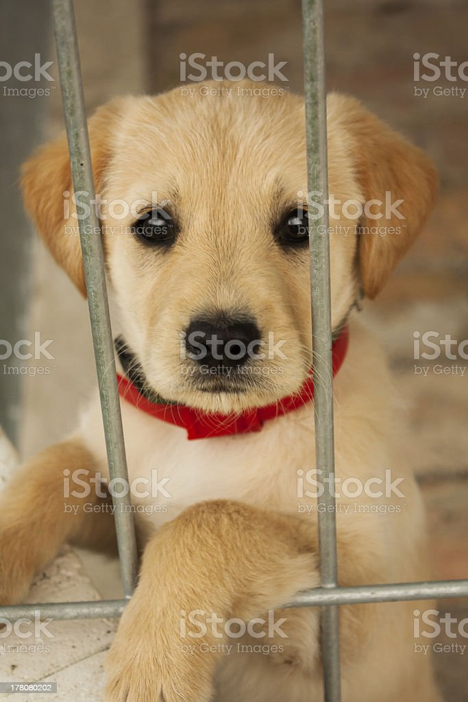Cute baby dog,puppy in a cage stock photo