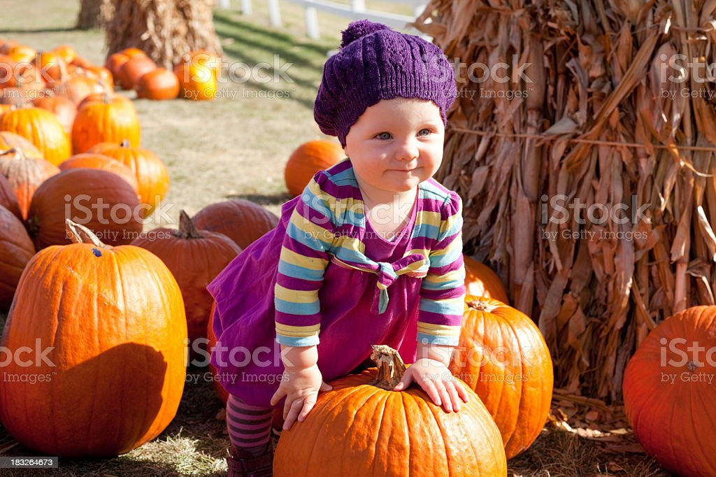 A cute baby girl standing with a pumpkin in a pumpkin patch royalty-free stock photo