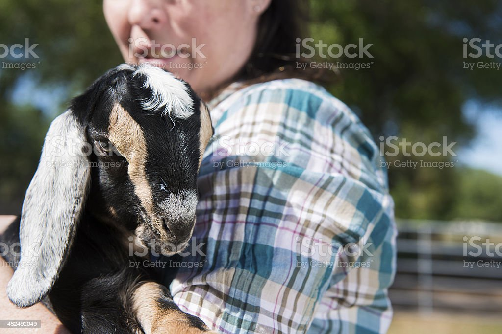 Cute Baby Goat in Farmer's Arms stock photo
