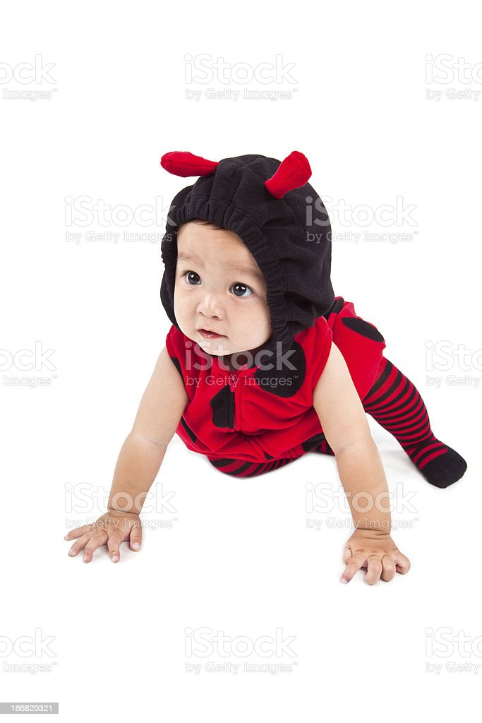 cute baby in ladybug costume royalty-free stock photo
