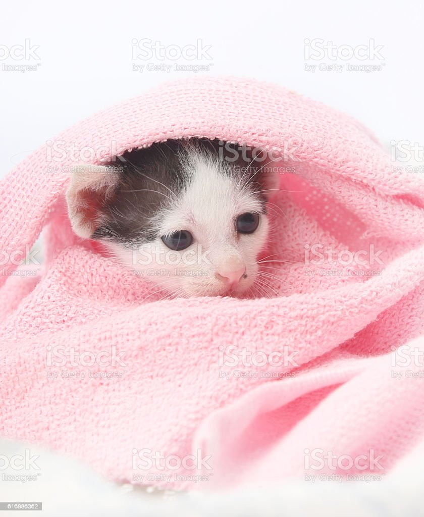 Cute baby kitten wrapped in pink blanket stock photo