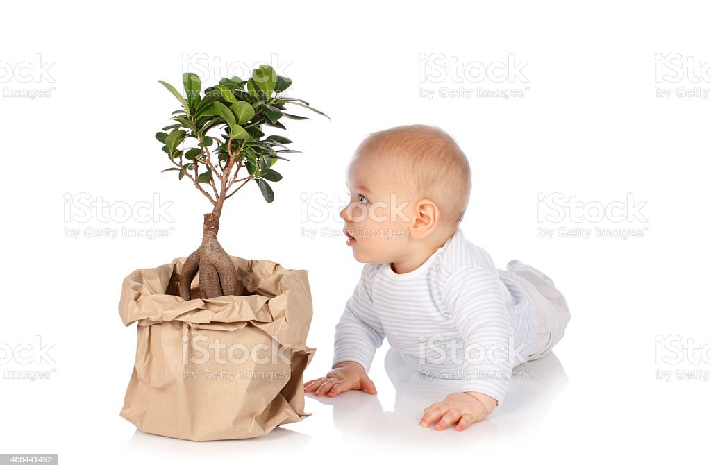 Cute baby looks at a  small tree stock photo
