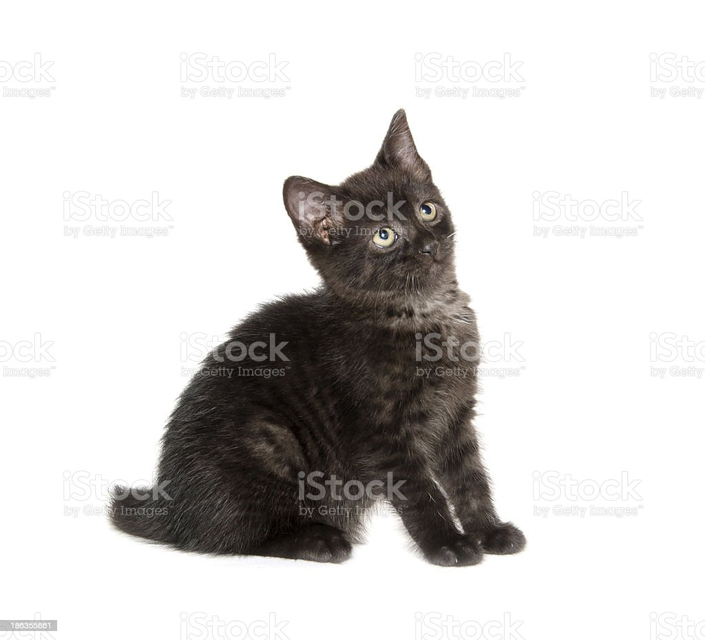 Cute black cat on white stock photo