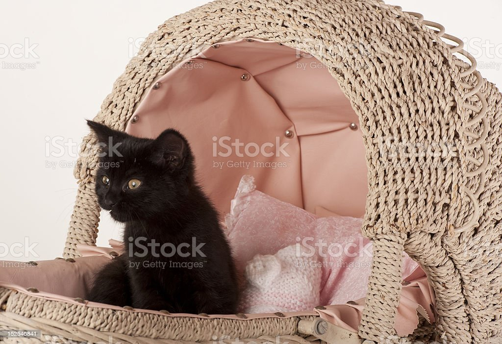 cute black kitten in toy baby carriage royalty-free stock photo